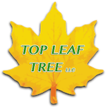 Top Leaf Tree LLC